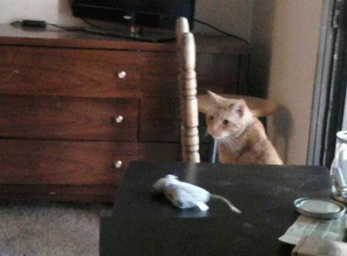 Cat: Morris M. Morris