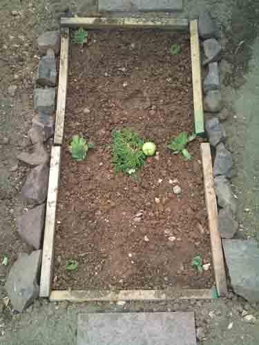 Dog: Rollie garden grave